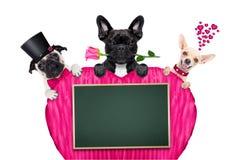 Fila del día de tarjetas del día de San Valentín del perro Fotos de archivo libres de regalías