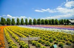 Fila del fiore variopinto nell'azienda agricola di Tomita Immagini Stock Libere da Diritti