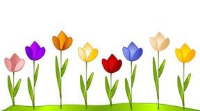 Fila del jardín del tulipán de tulipanes