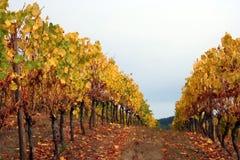 Fila del otoño Foto de archivo libre de regalías