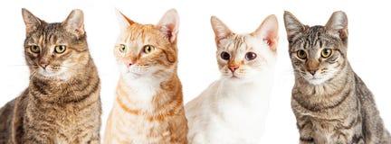 Fila del primer de los gatos Foto de archivo