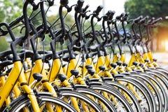 Fila delle biciclette parcheggiate Le biciclette gialle stanno su un parcheggio per la r fotografia stock