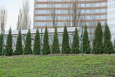 Fila delle conifere verdi dietro una griglia del ferro fuori nell'erba fotografie stock