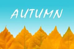 Fila delle foglie di autunno gialle fotografia stock