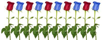Fila delle rose di colore Fotografia Stock