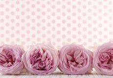 Fila delle rose rosa fotografia stock libera da diritti
