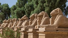 Fila delle sfingi dalla testa RAM in tempio di Karnak a Luxor, Egitto Immagini Stock