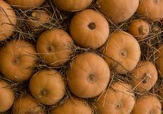 Fila delle zucche del fondo di autunno di ottobre Web design rurale naturale di struttura della frutta della parete Immagini Stock