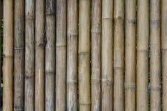 Fila di bambù asciutto Fotografia Stock