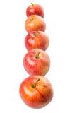 Fila di Gala Apple reale III Fotografie Stock