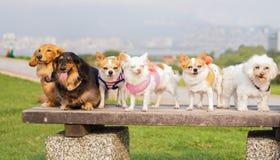 Fila di Puppys in una fila Fotografia Stock Libera da Diritti