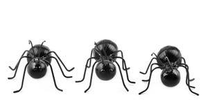 Fila horizontal de tres hormigas Imagen de archivo libre de regalías