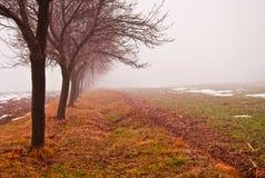 Fila mistica degli alberi Fotografia Stock