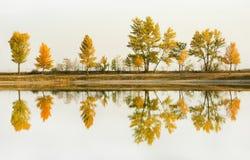 Fila otoñal del árbol en la orilla que duplica en el lago público de la natación imagen de archivo libre de regalías