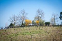 Fila superior del viñedo del prosecco de la colina en primavera Imagenes de archivo