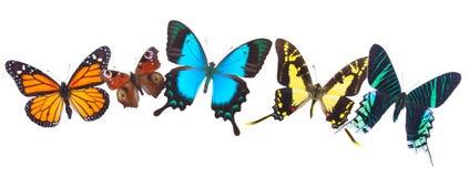 Fila tropicale delle farfalle Immagine Stock