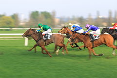 Filadelfia and Dekolt horse racing in Prague Stock Photos