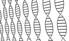 Filamentos de la DNA fotografía de archivo