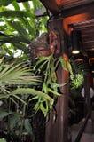 filar roślina Zdjęcia Stock
