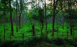 Filas de árboles Fotos de archivo libres de regalías