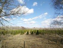 Filas de árboles Imagen de archivo libre de regalías