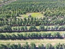 Filas de árboles en el jardín Aerophotographing, visión superior Imagen de archivo libre de regalías