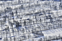 Filas de árboles en el valle de Isar Foto de archivo libre de regalías