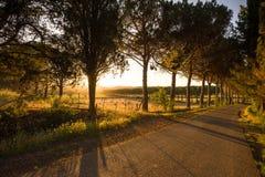 Filas de árboles a lo largo de un camino en Toscana, cerca de Follonica - 05/30/2016 Imagen de archivo