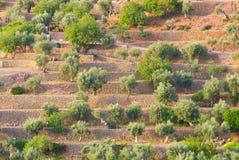 Filas de árboles sobre las paredes de piedra Imagen de archivo libre de regalías