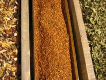 Filas de hojas de té secadas Fotos de archivo libres de regalías