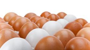 Filas de huevos blancos y marrones Imagenes de archivo