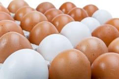 Filas de huevos blancos y marrones del pollo Fotos de archivo