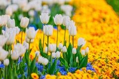 Filas de la flor de la primavera Fotos de archivo libres de regalías