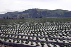 Filas de la granja Imagen de archivo