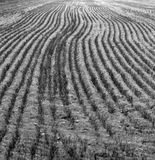 Filas de la hierba Imagen de archivo libre de regalías