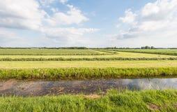 Filas de la hierba cosechada en verano Imagen de archivo