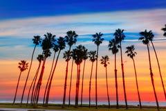 Filas de la palmera de la puesta del sol de California en Santa Barbara Foto de archivo libre de regalías