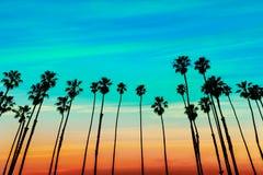 Filas de la palmera de la puesta del sol de California en Santa Barbara imagen de archivo libre de regalías