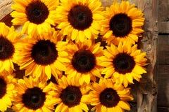 Filas de las floraciones marrones y amarillas del girasol Imagen de archivo