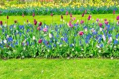 Filas de las flores del tulipán Fotos de archivo libres de regalías