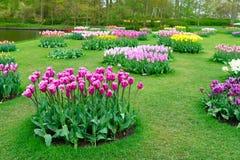 Filas de las flores del tulipán Fotos de archivo