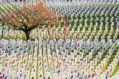 Filas de las piedras sepulcrales de los veteranos con las banderas americanas Imagen de archivo