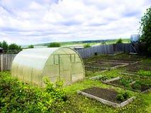 Filas de las plantas de tomate que crecen el invernadero interior Fotos de archivo libres de regalías