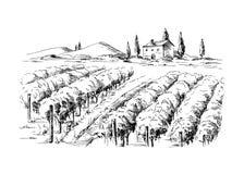 Filas de las plantas y del castillo de la uva del viñedo ilustración del vector