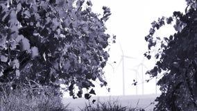 Filas de las turbinas del viñedo y de viento almacen de video