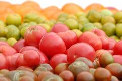 Filas de las variedades del tomate. Fotografía de archivo