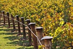 Filas de las vides de uva del lagar en colores del otoño Foto de archivo