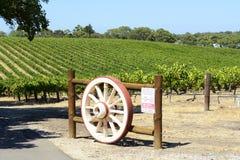 Filas de las vides de uva con la puerta de la rueda del wagen, Barossa Valley, sur de Australia imagenes de archivo