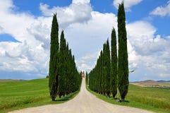 Filas de los árboles de Cypress Fotografía de archivo