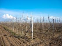 Filas de los árboles frutales foto de archivo